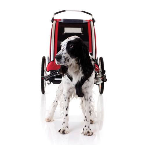 Dog Bike-Buggy Cab